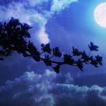 ことわざ【月とすっぽん】なぜ、すっぽんと比べる?